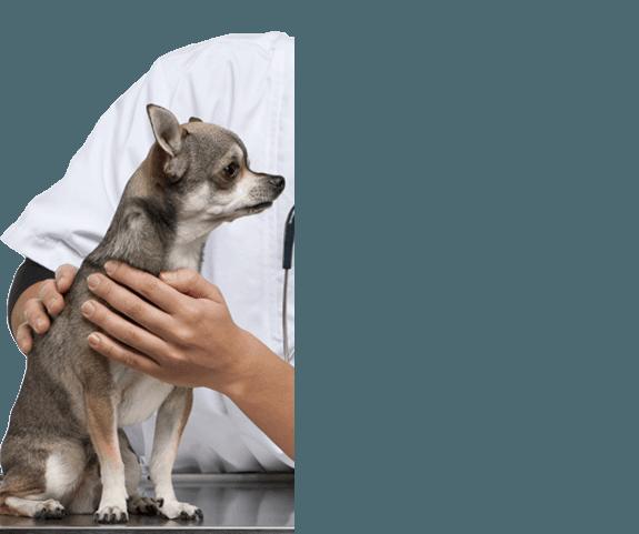 pvs-small-dog