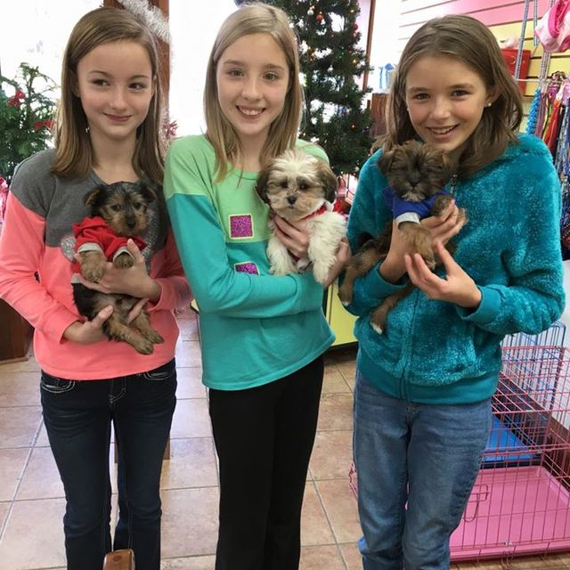 Tinytykes Puppies | Purebred and Designer Puppies