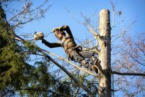 Trimming and tree maintenance in Indian Trail, NC