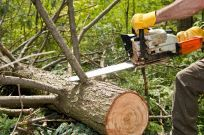 Tree removal done by  Kiker Tree Service & Stump Removal