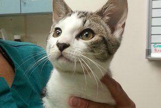 cat veterinarian Buffalo, NY