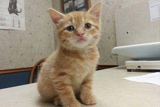 cat veterinarian Amherst, NY