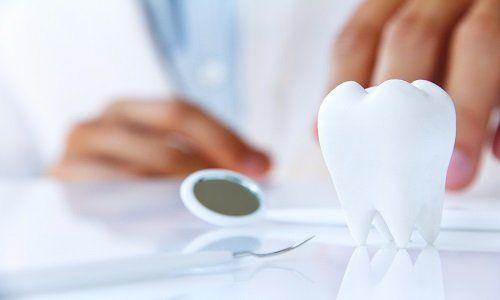 dentista in possesso di molare, concetto dentale