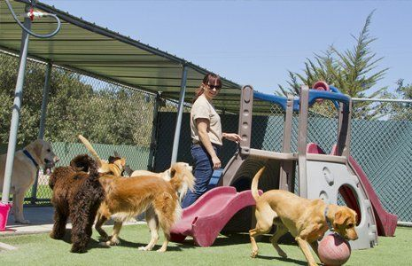 dogs playing in play area