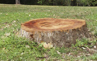 stump for removal