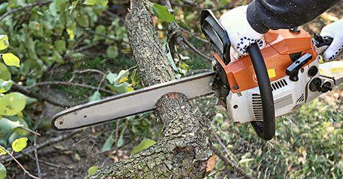 Tree Maintenance, Meadville, PA