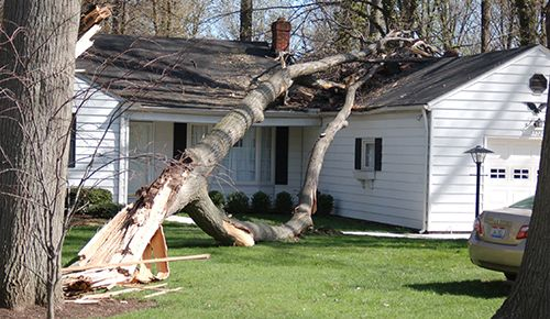 Tree Removal, Meadville, PA