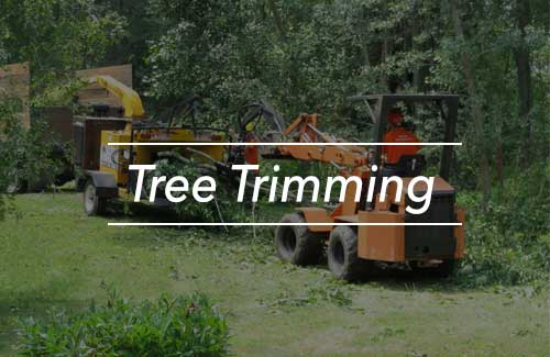 Tree Service Erie, PA
