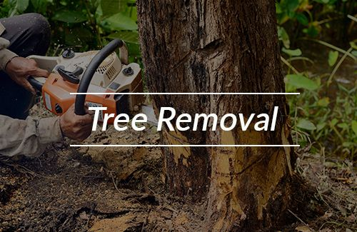 Tree Removal Erie, PA
