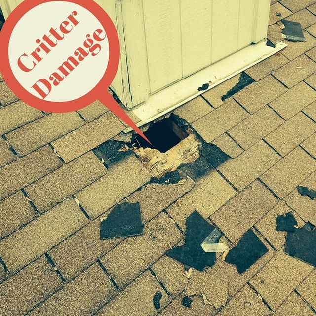 Critter Damage Austin Roofing and Construction