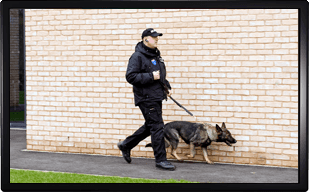 man sitting in front of security monitors, a security dog and some vans