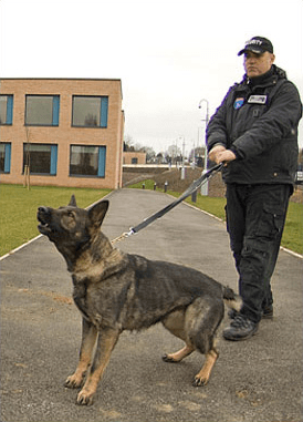 Multiple images showing security services including boarding up, guard dogs and more