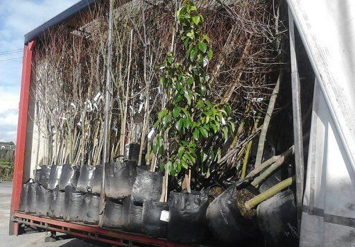 Haulage truck filled with garden and nursery products in Wanganui