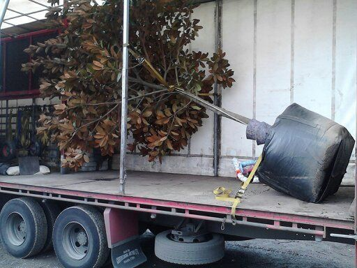 Tree on side in road freight truck in Wanganui