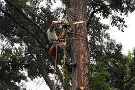 Tree Removal Benton