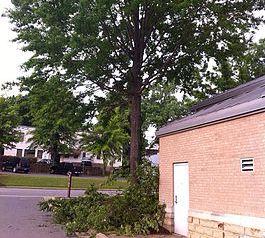 Tree Removal Malvern