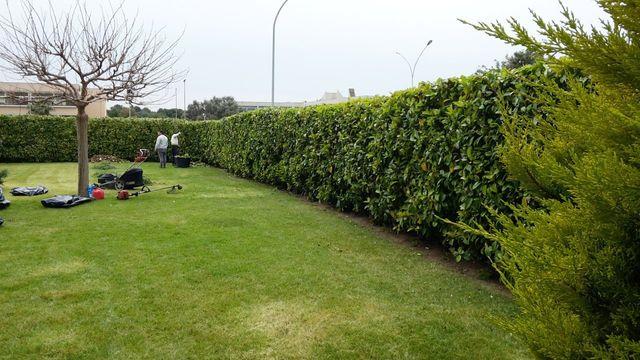 un prato di un giardino con un albero spoglio, dei giardinieri e una siepe che circonda l'area