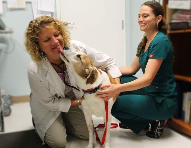 Emergency Animal Services | Southwest Florida | Southwest