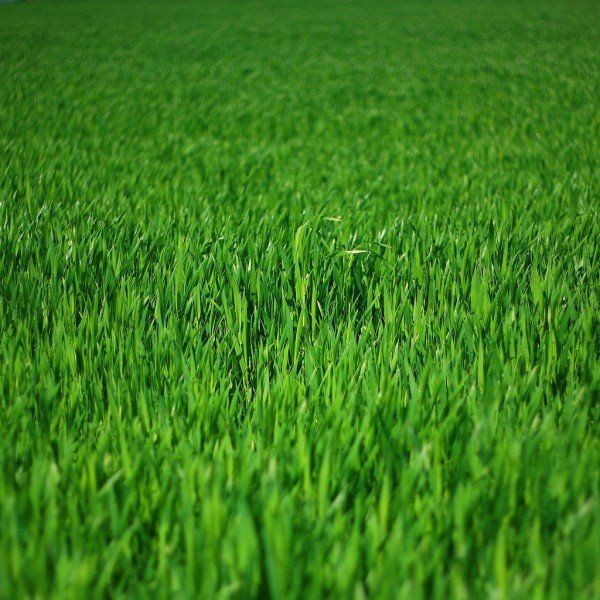 Lawn mowing and maintenance in St. Charles, MO