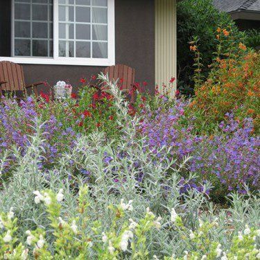 landscaping design using native missouri plants in St Charles MO