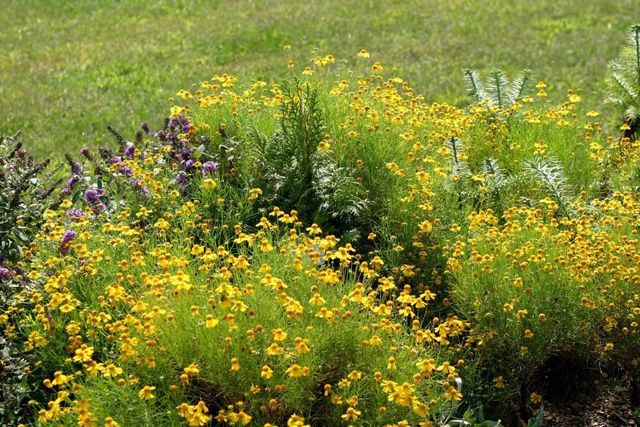 Plant landscaping St. Charles MO