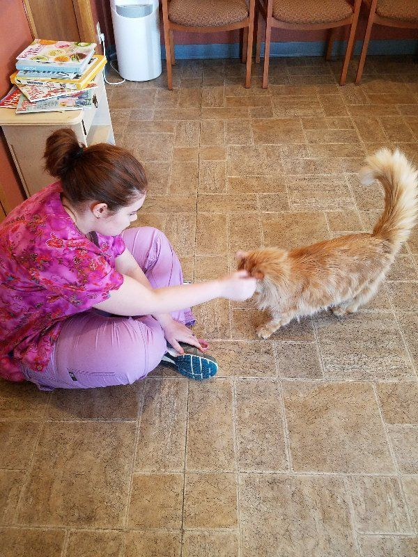 Ottawa cat neuter clinic