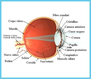 medici specialisti, oculistica, servizi di medicina specialistica