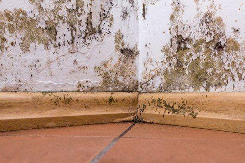 un muro con della muffa e degli zoccolini di legno sotto