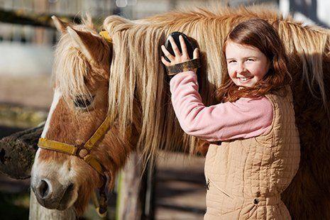 Una bambina striglia un cavallo