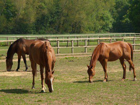 Tre cavalli nel maneggio