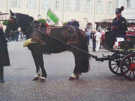 Primo piano di carrozza con cavallo