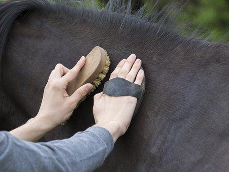 Primo piano di mani che strigliano un cavallo