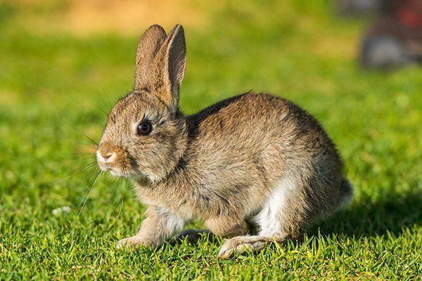 Un piccolo coniglio