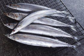Wholesale seafood - North Wales - Harry Jesse - Fish