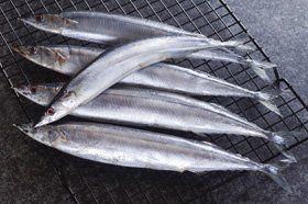 Wholesale seafood - North Wales - Harry Jesse - Fish