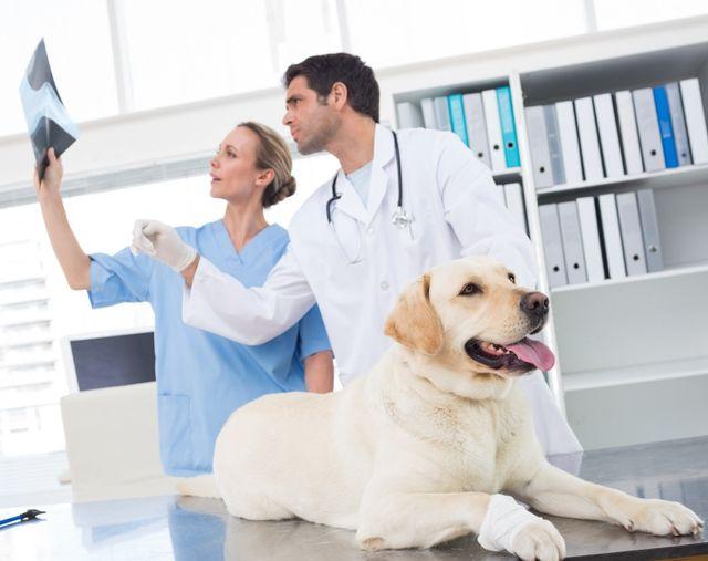 Veterinario con collega che discute Xray di cane in clinica