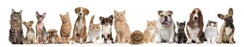 Foto de famiglia con tutti i cani e gatti