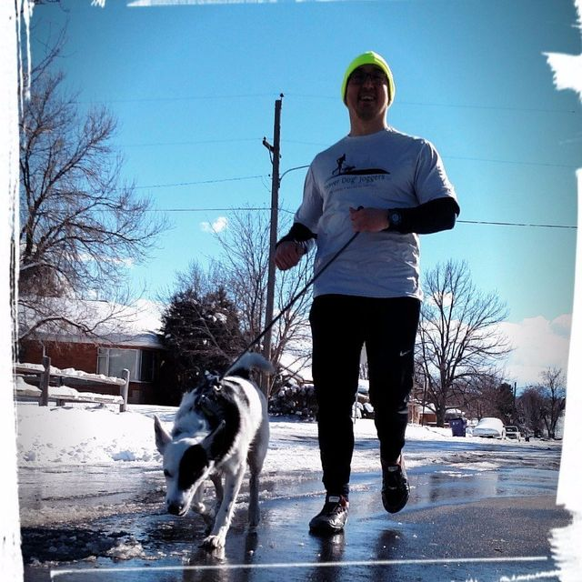 Denver Dog Joggers - Matt