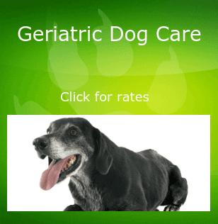 Geriatric dog care