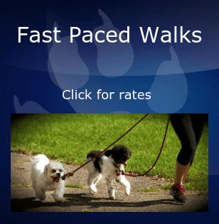 Fast Dog Walker