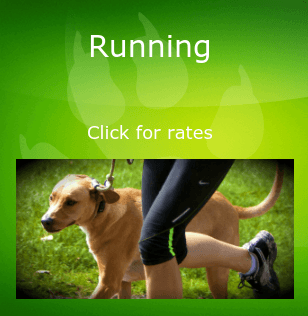 Denver Dog Running