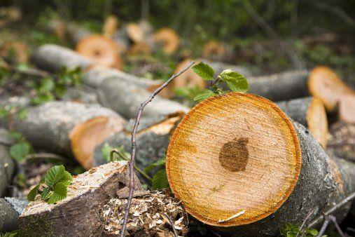 Exposed Tree Trunk - Carney Tree Service, LLC - Wyckoff, NJ
