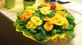 creazione, bouquet