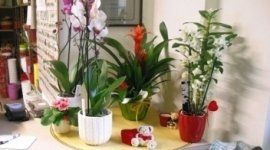 piante, casa, vaso