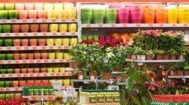 piante, vasi, concimi