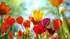 fiori, freschi, recisi