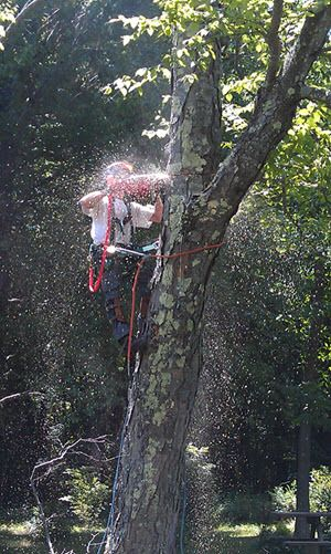 Tree Work by Kenneth Stewart