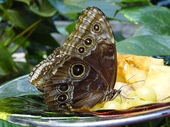 The Butterfly Palace & Rainforest Adventure - Branson, MO 65616 - Butterfly Aviary