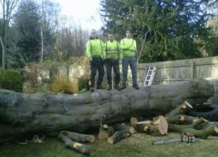 men standing on a cut down tree