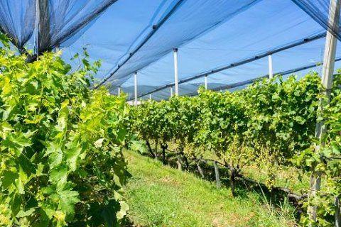 Sistemi di irrigazione per frutteti